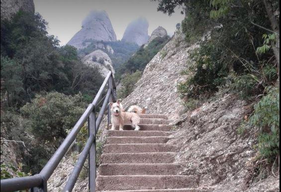 vacaciones con tu mascota